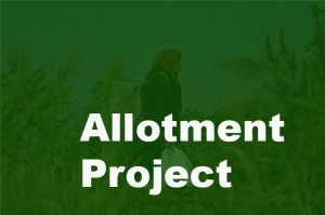 Allotment Project -13